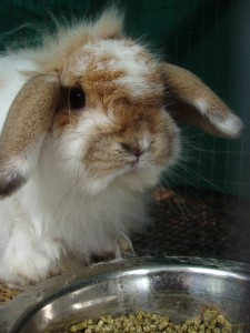 A bunny next to a water dish